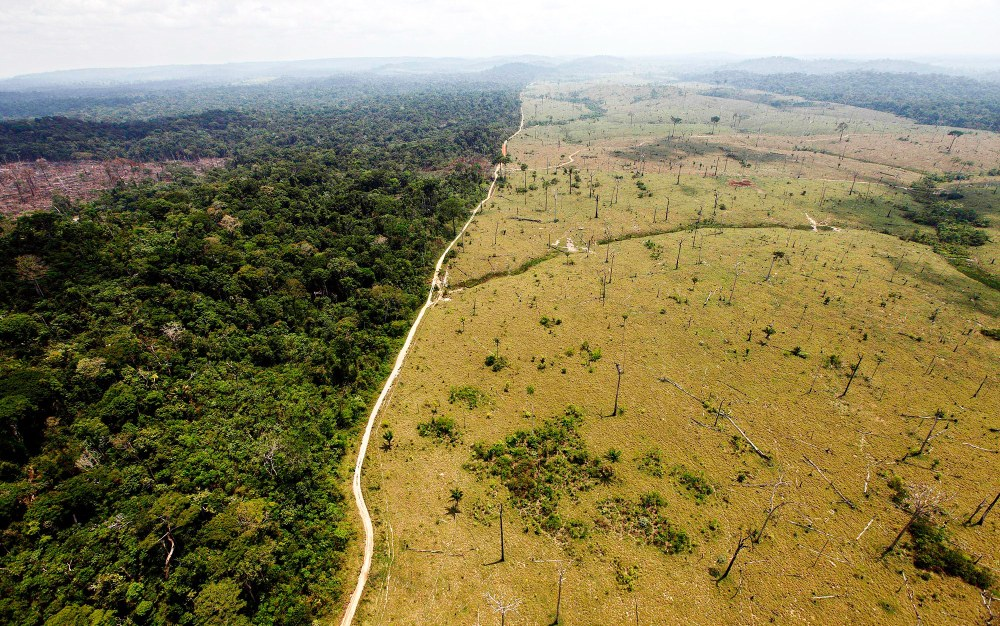 amazon deforestation.jpg