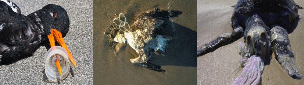 animal death plastic pollution.png