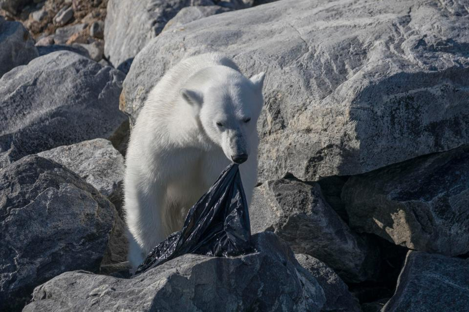 polar bear bin bag