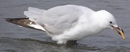 Cigarette polllution seagull