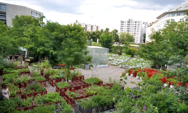 Urban Farming Berlin