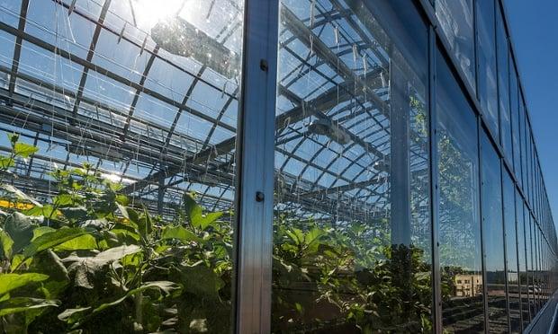 Urban Farming Canada