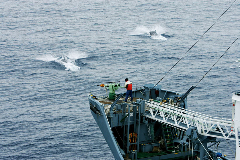 Greenpeace activists tracking the Japanese whaling fleet, Southern Ocean, Antarctica